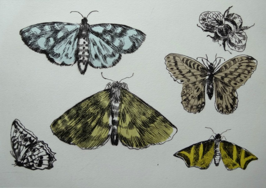 Drypoint insects(a)
