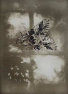Light in Darkness, 300x420mm, Solarplate etching, 2015 Edition of 20