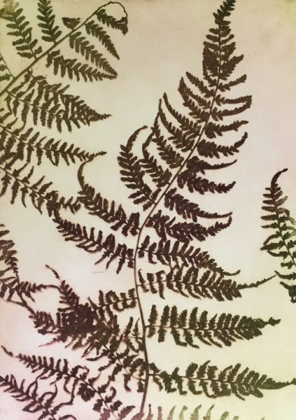 Fern, Solarplate print