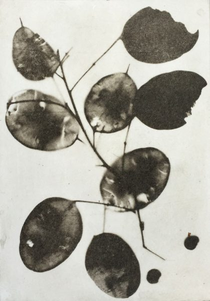 Honesty, Solarplate