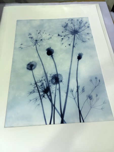 Solarplate print(ii)w